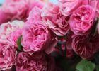 """Những """"gánh hàng hoa"""" của người Việt ở Đức"""