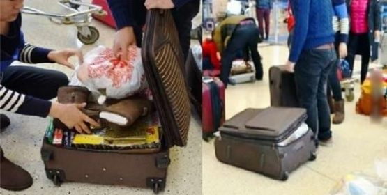 Xách đồ hộ ở sân bay, coi chừng thành tội phạm