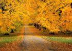 Những chuyến đi bộ đường dài mùa thu đẹp nhất nước Đức